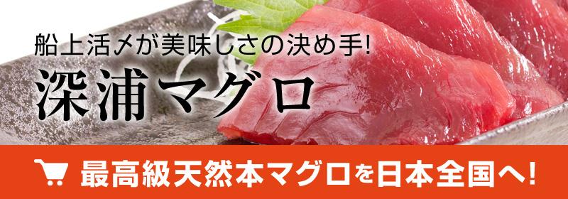 最高級天然本マグロを全国へ通信販売!船上活〆が旨さの決め手!深浦マグロ